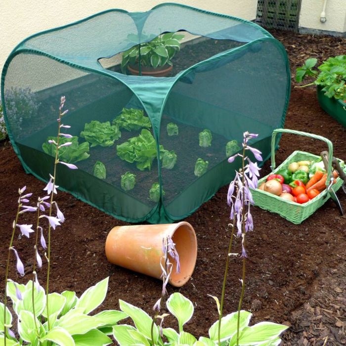 Small Pop Up Fruit Cage