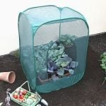 Pop Up Fruit Cage 1m x 1m x 1.25m