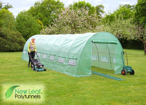 New Leaf Polytunnel 8m x 3m (26ft 3in x 9ft 10in)