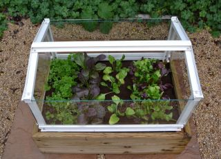 Herb & Salad Cloche Planter - Plain Aluminium