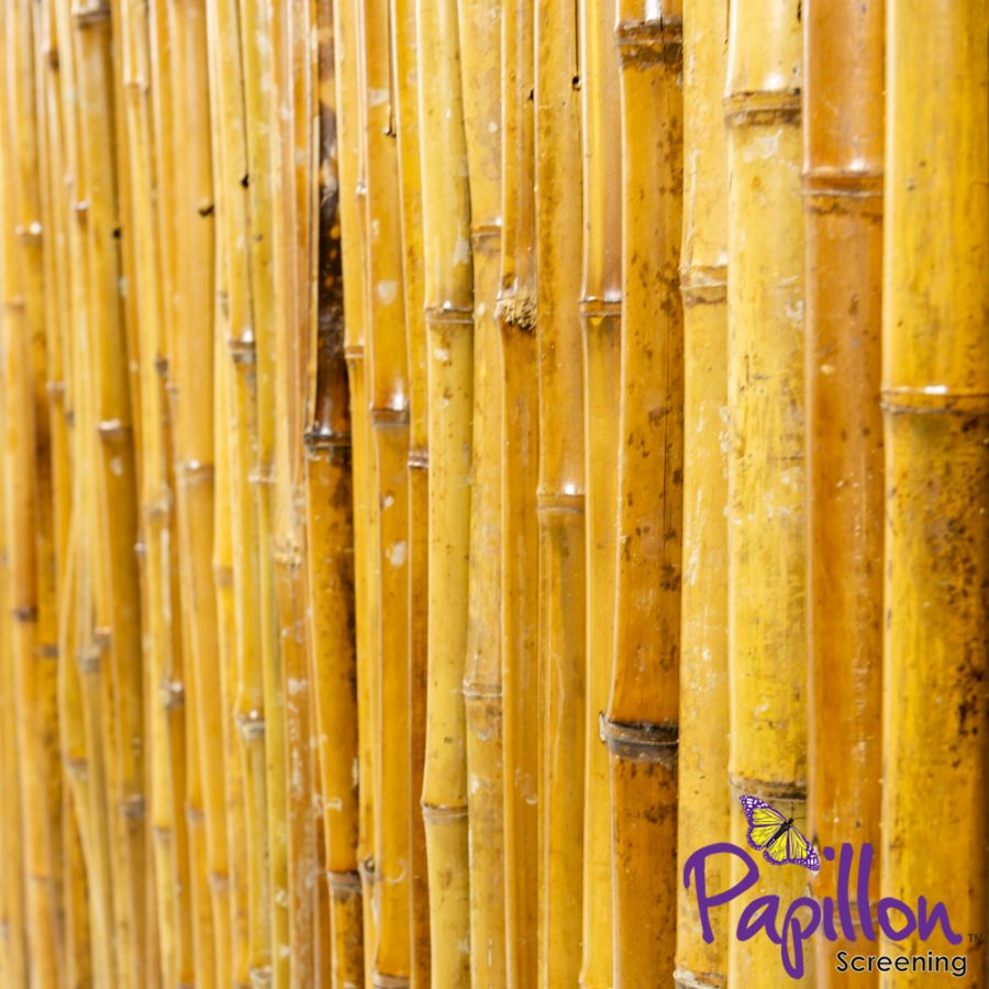 Thick Carbonised Caramel Bamboo Fencing Screening Roll 1.9m x 1.8m (6ft 2in x 6ft) - By Papillon™