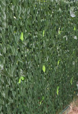 3.0m x 1.5m Ivy Hedge Artificial Screening by Papillon™