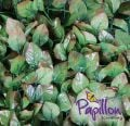 2m x 3m Hazelnut Leaf Artificial Screening Papillon�