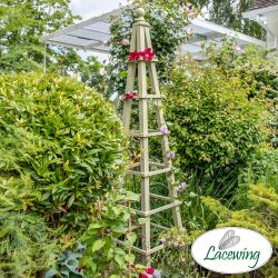 195cm Premium Sage Wooden Obelisk Plant Support by Lacewing™