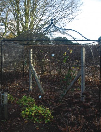 Agriframes Black Gothic Top Fruit Cage - 2.5m x 10m