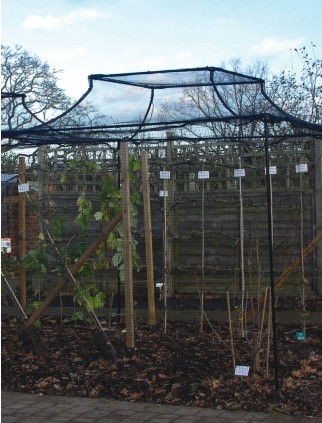 Agriframes Black Arched Top Fruit Cage - 2.5m x 7.5m