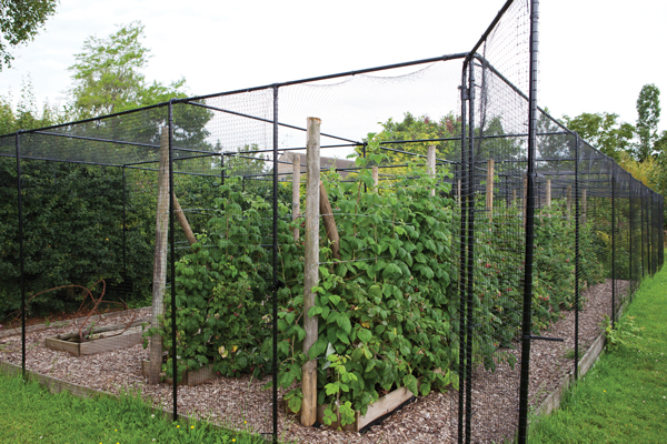 Agriframes Black Coated Superior Fruit Cage - 2.5m x 2.5m