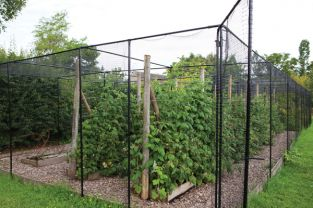 Agriframes Black Coated Superior Fruit Cage - 7.5m x 10m