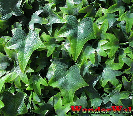 1m Traditional English Ivy Artificial Screening