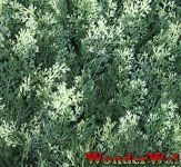 1m x 1m Conifer-Summer Snow Artificial Screening by Wonder Wal™