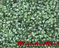 1m x 1m Buxus Artificial Screening by Wonder Wal�