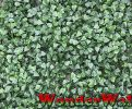 1m x 1m Buxus Artificial Screening by Wonder Wal™