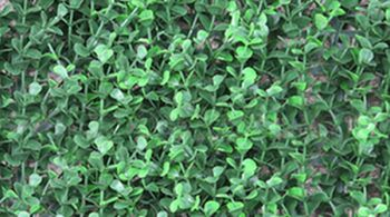 1m Cotoneaster Leaf Artificial Screening