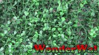 1m x 1m Cotoneaster Leaf Artificial Screening by Wonder Wal�