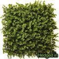 50cm x 50cm Foliage Artificial Hedge Panel by Hedged In�