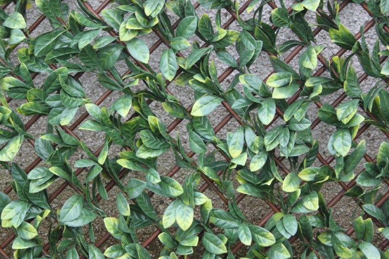 1m x 2m Extendable Artificial Laurel Leaf Screening Trellis