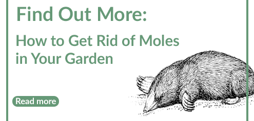 how to get rid of moles blog post