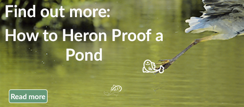 heron proof pond