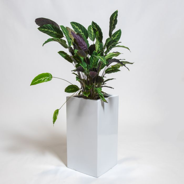 60cm White Gloss Polystone Tall Cubic Planter