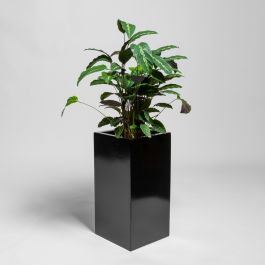 80cm Black Gloss Polystone Tall Cubic Planter