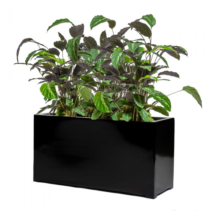 80cm Black Gloss Polystone Trough Planter