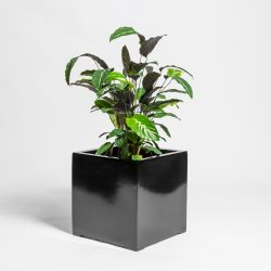 70cm Black Gloss Polystone Cube Planter