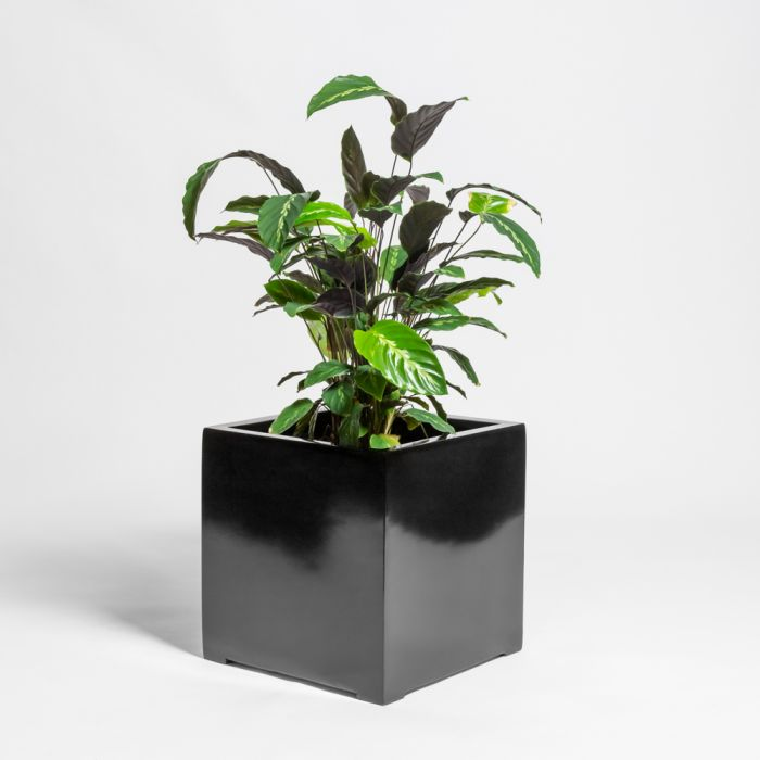 60cm Black Gloss Polystone Cube Planter