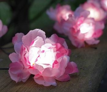 Smart Garden 10 Solar Pink Rose String Lights