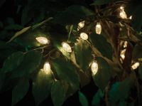 50 Extra Large Bulb String Lights - Warm White