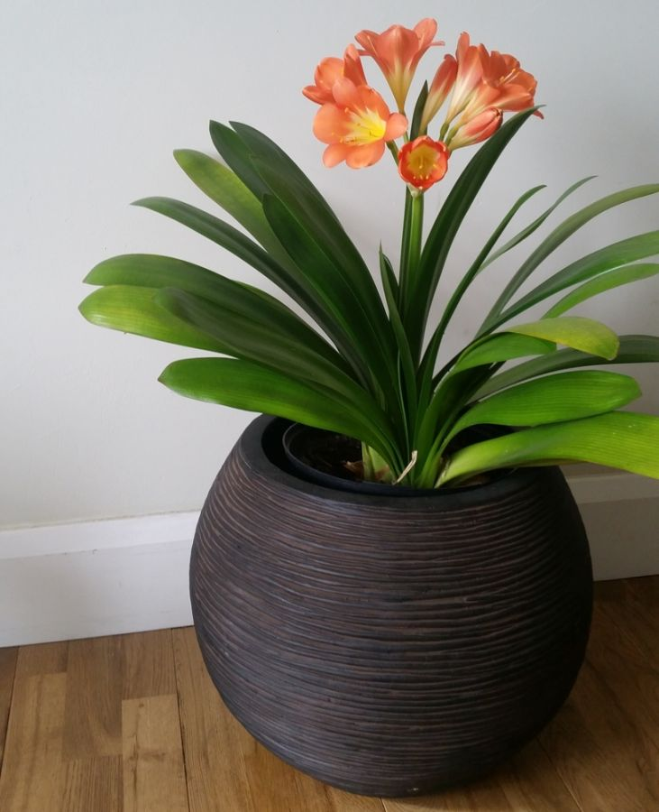 40cm Capi Nature Ball Vase Ribbed Planter - Brown