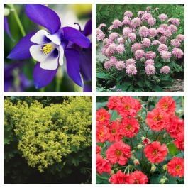 Early Spring Perennials Collection | 4 x 10.5cm Pots