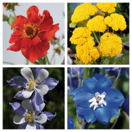 Jewel Garden Perennial Collection | 12 x 10.5cm Pots