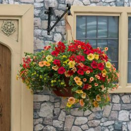 'Heat Wave' Hanging Basket Speed Planter