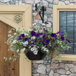 'Sea Blues' Hanging Basket Speed Planter