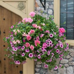 'Lipstick' Hanging Basket Speed Planter