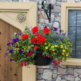 'Primary Fun' Hanging Basket Speed Planter