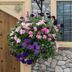 'Sophistication' Hanging Basket Speed Planter