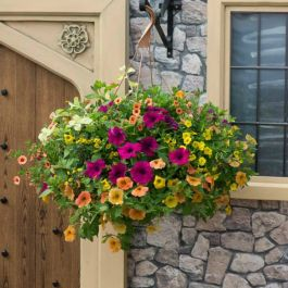 'Bollywood' Hanging Basket Speed Planter