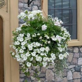 'Effortless' Hanging Basket Speed Planter