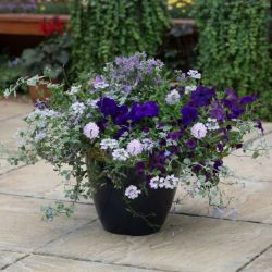 'Sea Blues' Container Speed Planter