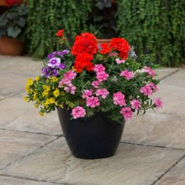 'Multicolour Mixed' Container Speed Planter