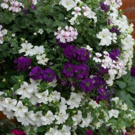 'Berry Swirl' Container Speed Planter | Exclusive to Primrose