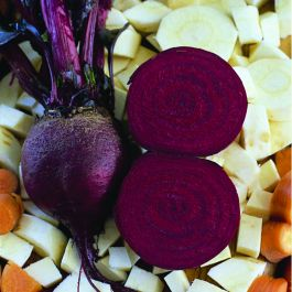 'Detroit' Beetroot Plants | 10 Plants | By Plant Theory