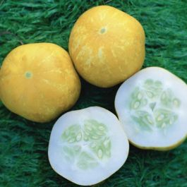 'Crystal Lemon' Cucumber Plants | 3 Plants | By Plant Theory