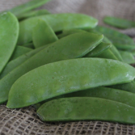 'Carouby de Mausasane' Mangetout Pea Plants | 10 Plants | By Plant Theory