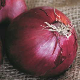 'Red Baron' Red Onion Plants | 20 Plants | By Plant Theory