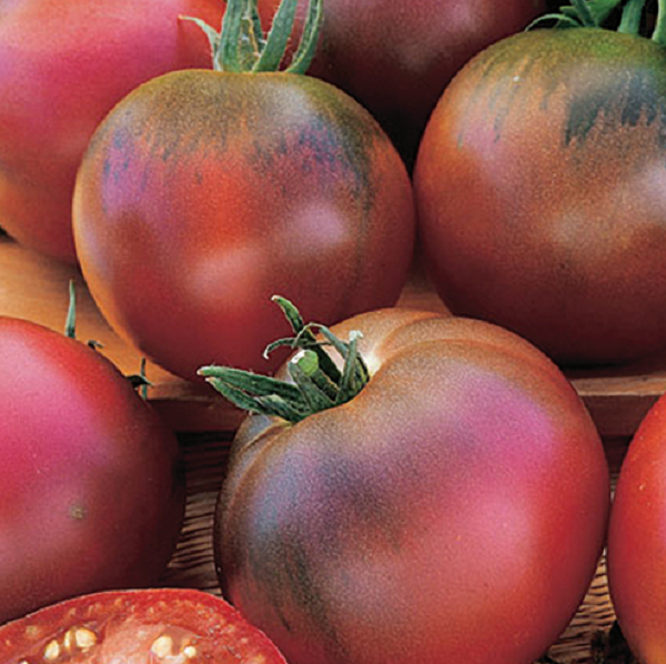 'Black Russian' Tomato Plants | 5 Plants | By Plant Theory