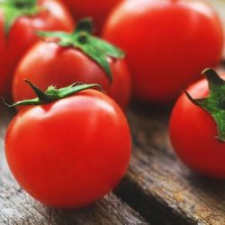 'Tiny Tim' Tomato Plants | 5 Plants | By Plant Theory