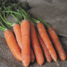 'Early Nantes' Carrot Plants |10 plants | By Plant Theory