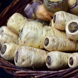 'Countess' Parsnip Plants |10 Plants | By Plant Theory